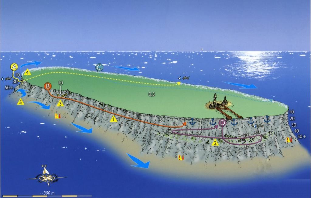 daedalus reef abu el kizan_resize.jpg